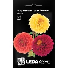 Георгіна махрова Помпон 0,2г LEDAAGRO