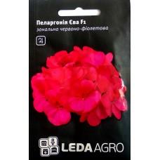 Пеларгонія Єва F1 червоно-фіолетова 5шт LEDAAGRO