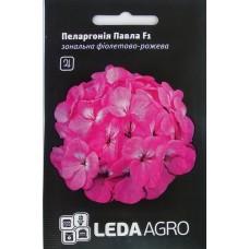 Пеларгонія Павла F1 фіолетово-рожева суміш 5шт LEDAAGRO