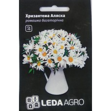 Хризантема багаторічна Аляска 0,4г LEDAAGRO