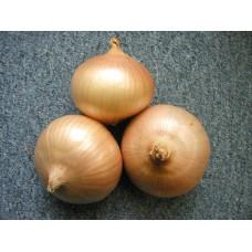 Озима цибуля саджанка Августа Голландія Top Onion 1 кг