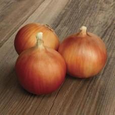 Озима цибуля саджанка Августа Голландія Top Onion 500г