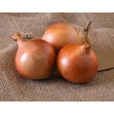 Озима цибуля саджанка Шекспір Голландія Top Onion 1кг