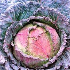 Капуста савойська Верона пурпурова 0,5г ТМ Коуел